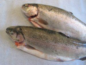 خرید ماهی قزل آلا زنده