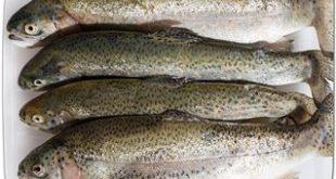سایت خرید فروش ماهی قزل الا به قیمت تولیدی