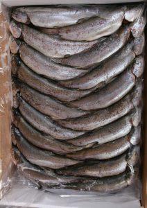 فروش ماهی قزل آلا بسته بندی