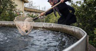 آخرین قیمت ماهی قزل آلا در بازار