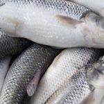 فروش عمده ماهی قزل آلا