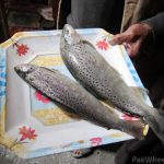 صادرات ماهی قزل آلا لرستان به روسیه