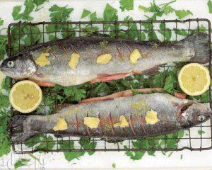 خرید و فروش ماهی قزل آلا