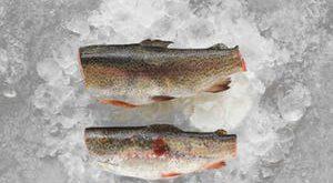فروش ماهی قزل آلا منجمد