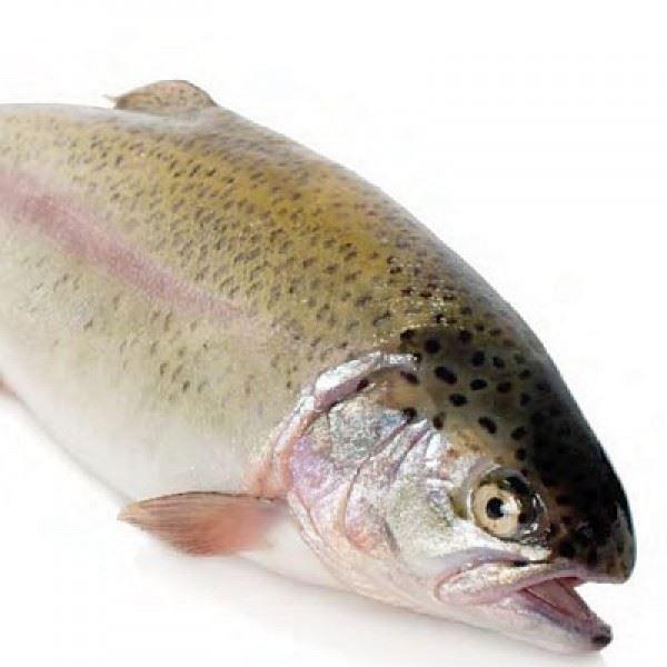 فروش عمده ماهی قزل آلا زنده سر استخر پرورش