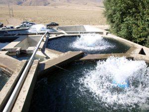 سیستم مدار بسته پرورش ماهی در اصفهان