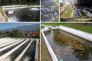 سیستم مداربسته پرورش ماهی در ایران
