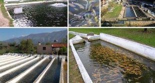 طراحی و اجرای سیستم های مداربسته پرورش ماهی با کارایی بالا