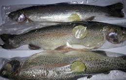 خرید ماهی قزل آلا در بازار تهران