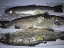 خرید عمده ماهی قزل آلا تازه شهرکرد
