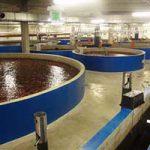 صادرات ماهی قزل آلا به روسیه