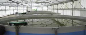 سیستم مدار بسته پرورش ماهی قزل آلا در رشت