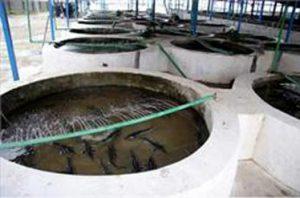 قیمت دستگاه تصفیه آب استخر پرورش ماهی در ایران
