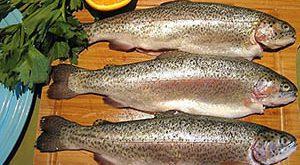 قیمت روز هر کیلو ماهی قزل آلا در بازار تهران