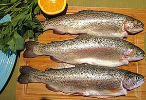 خرید عمده ماهی قزل آلا تازه در تهران