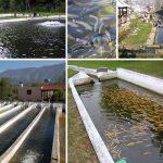 سیستم مدار بسته پرورش ماهی در کرج