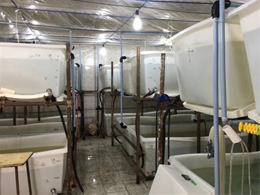 طراحی و اجرای سیستم مداربسته پرورش ماهی