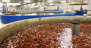 سیستم مدار بسته پرورش ماهی قزل آلا در کرج