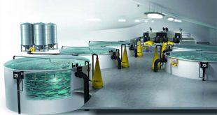 سیستم مدار بسته در پرورش ماهی با ارزانترین قیمت