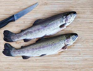 مراکز خرید ماهی قزل الا