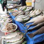 خرید فروش ماهی قزل الا در سراسر کشور