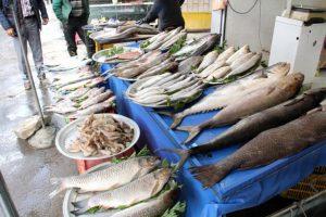 محل فروش ماهی قزل آلا در ایران