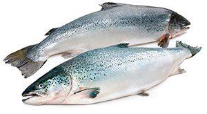قیمت جدید ماهی قزل آلا در مشهد