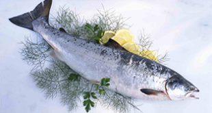خرید ماهی قزل آلا در کوتاه ترین زمان
