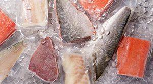 فروش ماهی قزل الا