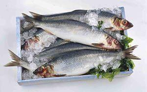 خرید ماهی قزل آلا لازم