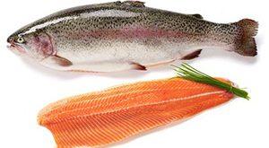 فروش ماهی قزل الا سالمون در ایران