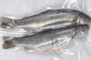 فروش ماهی قزل آلا تازه و پاک شده