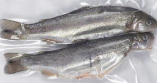 قیمت ماهی قزل آلا بسته بندی